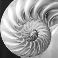 Spiral Pattern inside of a Nautilus Shell